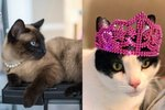 20 Stylish Cats Who Wore It Best