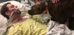 Dog's Final Goodbye To Her Dying Owner Will Make You Cry So Many Tears