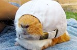 Just 21 Adorable Animals Wearing Cute Hats