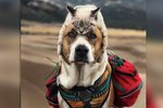 Here Are Some Photos Of A Dog & Cat Who Love Camping To Make Your Day Better
