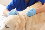 Information on Bordetella Vaccination for Dogs