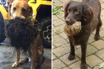 21 Dogs Who Brought Back Bizarre Things While Playing Fetch