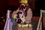 Heroic Cat Saves Sleeping Family From House Fire