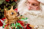 23 Animals With Seriously Mixed Feelings About Meeting Santa