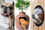 Amazon Holiday Gift Guide For Your Pets