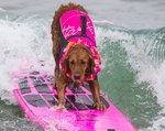 Incredible Surfing Dog Just Raised Half A Million Dollars For Charity