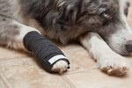 How to Bandage a Dog's Broken Toe