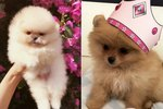 The Kardashians & Jenners Are In A War To Have The Cutest Puppy