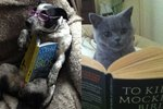 21 Pets Who Are Excited About Their Summer Reading