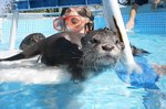 Traumatized Kids Swim With Otters At This Amazing Animal Rescue