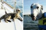 Adventurous Doggo & Kitty Couple Sail Around The World With Their Humans