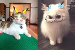 44 Pets Who Are Not Impressed By Your Snapchat Filters