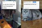 These Poorly Translated Russian Cat Memes Will Make You Pee From Laughing