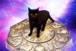 What Type Of Cat Are You Based On Your Zodiac?