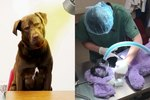 You Won't Believe The Hilarious Crime This Lab Is Accused Of Committing