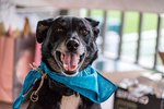 A Groom Finds Out Why Dogs Shouldn't Be In Weddings