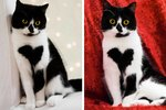 Cat's Heart Shaped Markings Will Make You Fall In Love