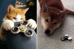 15 Pets Who Aren't Really Sure What To Make Of Fidget Spinners