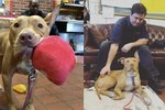 Abandoned Pit Finds Home With Hunky Firemen & We're So Jealous