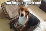 17 Thoughts Every Pet Parent Who Travels Can Relate To