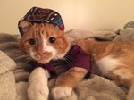 Cat Mom Creatively Conceals Kitty's Medical Condition With Handmade Outfits