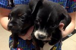 These Puppies Were Saved At The Last Minute From An Unlikely Place