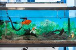 how to clean fish tank without removing fish