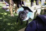 Dozens Of Pets Donning Caps & Gowns Will Turn Your Frown Upside Down