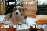 29 Hilarious Memes For The Corgi Lover In All Of Us