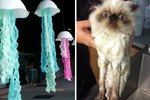 15 Animals Who Look Like Other Things