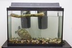 How to Keep Turtle Tanks Clear