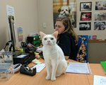 20 Office Cats Hard At Work Officing