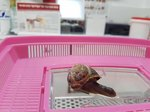You Won't Believe What This Woman Did For A Snail She Accidentally Stepped On