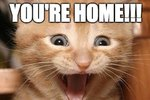 20 Cats Who Are So Happy You Came Home