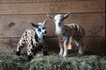 Watch Newborn Baby Goats Wearing Sweaters & Practicing Jumps For The First Time