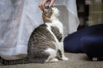 Are Citrus Fruits Poisonous to Cats?