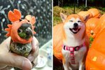 29 Pets Who Are So Excited For Halloween