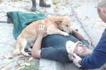 Loyal Dog Stays By Injured Owner's Side