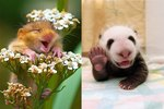 The 23 Best Animal Smiles You'll See Today