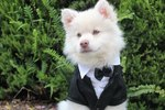 120 Distinguished Southern-Inspired Dog Names