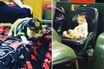 Firehouse Cat Sets Hearts Ablaze With Ridiculously Cute Instagram