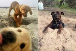 24 Dogs Who Are Digging Very Important Holes