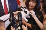 Meet BOTUS: The Vice Presidential Bunny Who Will Make America Fluffy Again