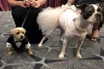 Posh Pups Raise Money For Animals In Need At The Bark Ball