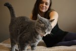 Happy Cat, Happy Life: Signs Your Cat Loves You