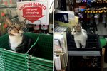 23 Cats Who Are Struggling During Their Shift At The Convenience Store