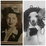 Woman Pranks Mom By Replacing Family Photos With Pics Of Pet Chihuahua