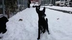 Watching Rescue Dogs' First Frolic In The Snow Makes Everything Cute Forever