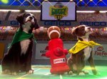 Everything You Need To Know About Puppy Bowl XIII