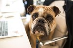 Meet The Bark Behind The Box: An Insider's Tour Of NYC's Most Dog-Friendly HQ
